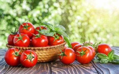 Pomodoro: ricco di vitamine è il principe della cucina italiana, ma non solo