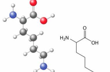 Lisina: che cos'è questo aminoacido essenziale e dove lo si trova