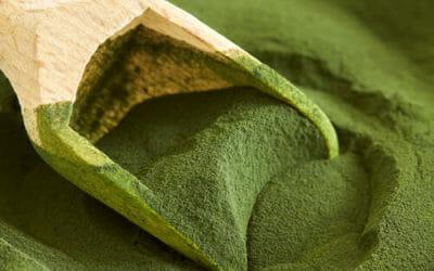 Clorella: un'alga blu-verde dalle notevoli proprietà benefiche