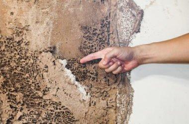 Esistono rimedi naturali contro le termiti realmente efficaci? La guida facile