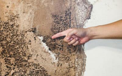 Rimedi naturali contro le termiti: disinfestazione naturale