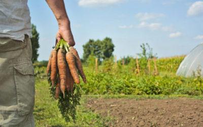 Ecor–NaturaSì, quando etica e biodinamica sono valori aziendali