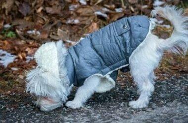 Come fare un cappotto per cani con materiali riciclati