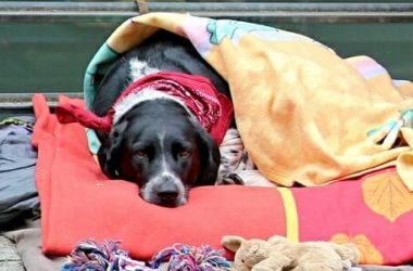 Displasia dell'anca nel cane: cause, sintomi e cure per il nostro amico peloso