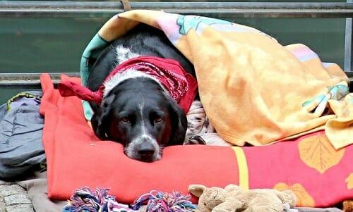 Photo of Displasia dell'anca nel cane: cause, sintomi e cure per il nostro amico peloso