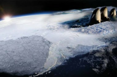 Frozen Planet: foto e video trailer in anteprima