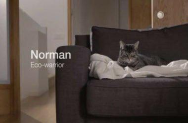 Norman il gatto green, come cambia la pubblicità