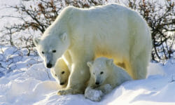 Save The Arctic: la nuova campagna Greenpeace per l'Artico