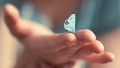 Photo of Tutto sulle farfalle: cose da sapere e curiosità poco note