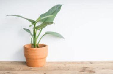 6 piante che richiedono poca luce, ideali per ambienti poco luminosi