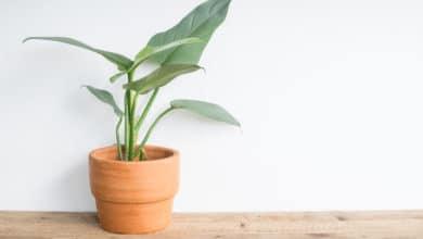 Photo of 6 piante che richiedono poca luce, ideali per ambienti poco luminosi