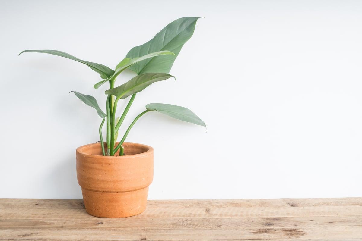 Pianta Da Ufficio Poca Luce piante che richiedono poca luce: quali sono le migliori?