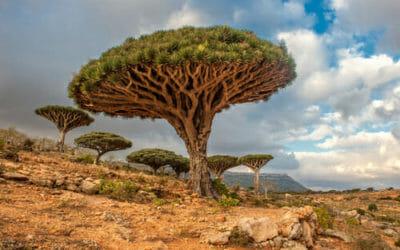 Quali sono gli alberi più antichi e storici della Terra? E in Italia?