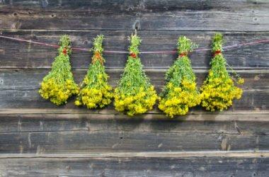 Iperico: proprietà e benefici di questa pianta