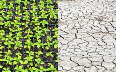 Climatarian, la dieta per chi è attento ai cambiamenti climatici