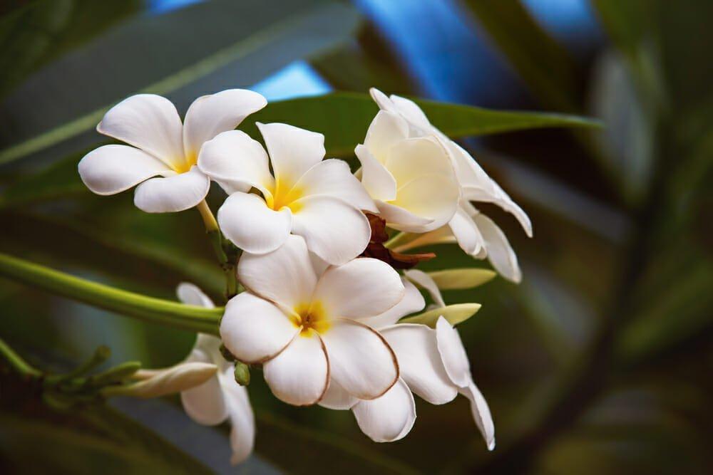 Photo of Cura del corpo e dei capelli con l'olio di monoi, la pianta simbolo di Tahiti