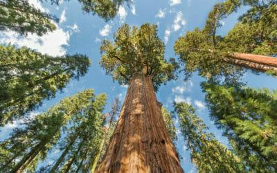 Le piante secolari delle foreste del Parco Nazionale di Redwood, California