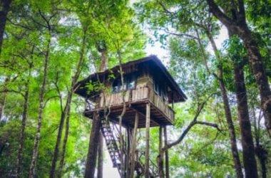 Casa sull'albero: materiali, consigli pratici e come costruirla