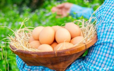 Uova biologiche: benefici e come riconoscerle