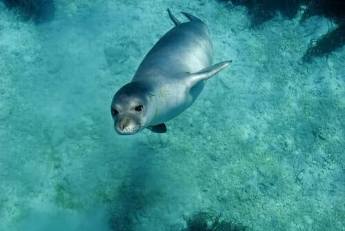 Photo of La Foca Monaca: radiografia di una specie a rischio di estinzione