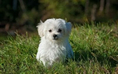 Cani piccoli: quali sono e che caratteristiche hanno
