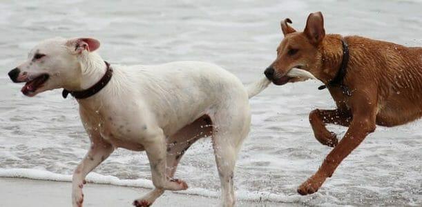 cani che non mordono taglia grande