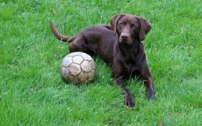 Cani che non abbaiano: quali sono le razze di cani più silenziose?