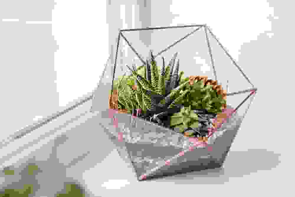 Photo of Come fare un terrarium perfetto: la guida pratica