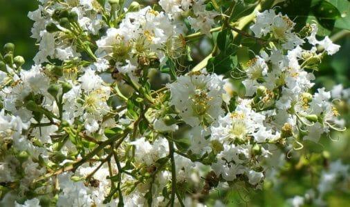 Photo of Mirto: caratteristiche e proprietà della pianta aromatica simbolo della Sardegna