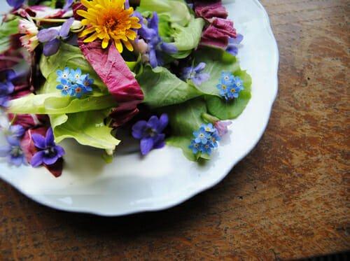 Photo of Fiori che si possono mangiare: quali sono i fiori commestibili