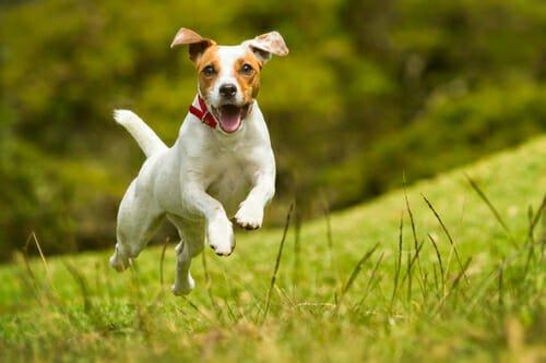 Photo of Cani piccoli: quali sono e che caratteristiche hanno