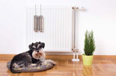 Come umidificare la casa con metodi naturali