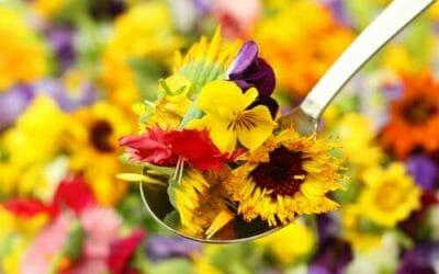 Fiori che si possono mangiare: quali sono i fiori commestibili