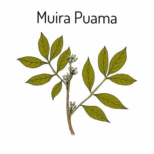 Photo of Muira puama: proprietà e controindicazioni dell'erba dell'amore