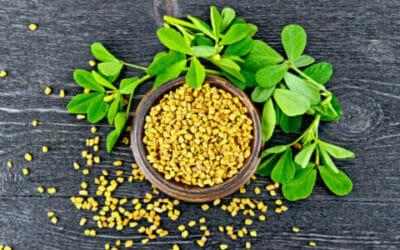 Fieno greco: tutti i benefici di una pianta dall'odore intenso conosciuta già dagli Egizi