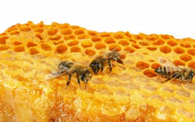 Guida alle proprietà ed ai benefici per la salute della cera d'api