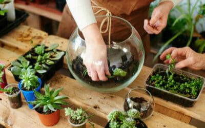 Come fare un terrarium perfetto: la guida pratica