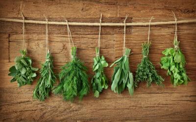 Erbe aromatiche: coltivare e raccogliere le piante aromatiche
