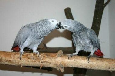 Pappagallo: caratteristiche comuni e peculiarità delle varie specie di uccelli