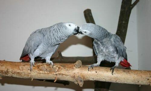Photo of Pappagallo: caratteristiche comuni e peculiarità delle varie specie di uccelli