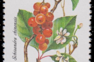 Schisandra, la pianta anti-stress che viene dall'Oriente