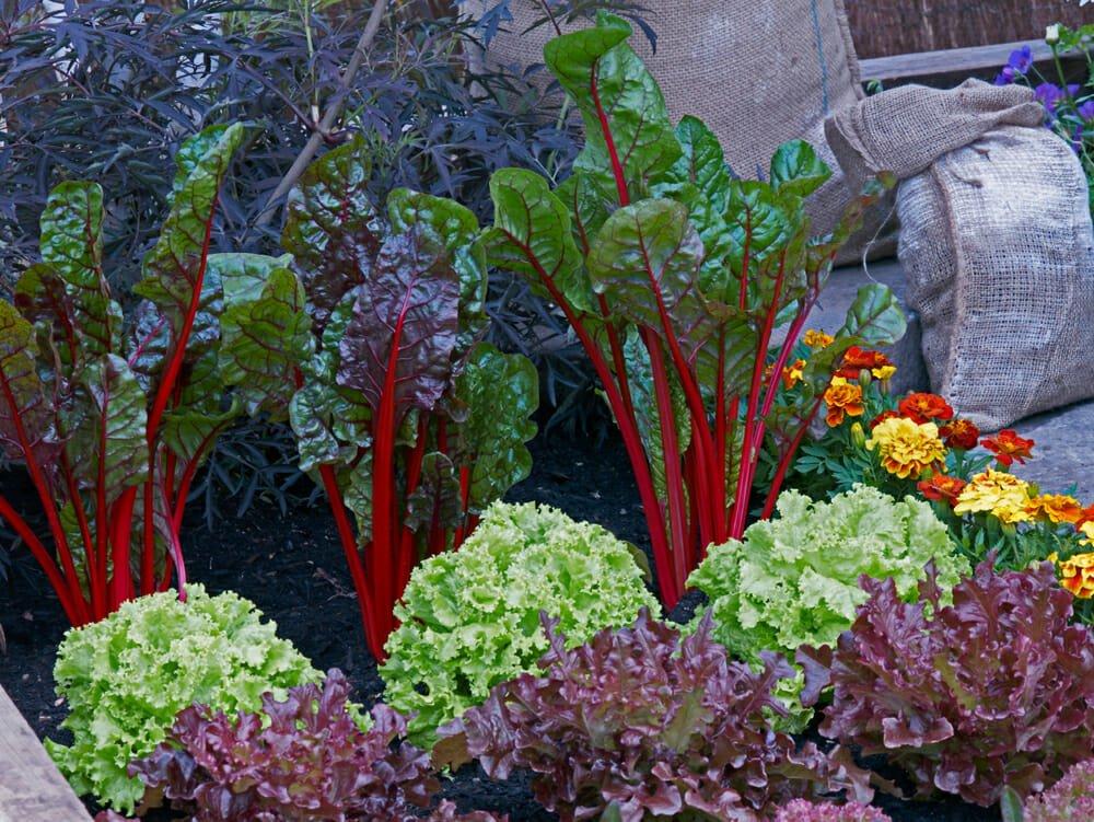 Photo of I lavori dell'orto di giugno: cosa seminare, raccogliere e potare