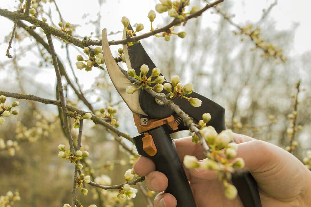 Photo of I lavori dell'orto di aprile: cosa seminare, raccogliere e potare