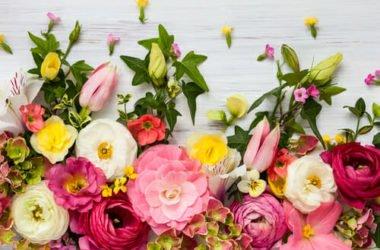 Mini-guida al linguaggio dei fiori: ad ogni fiore il suo significato