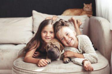 Sharpei, un cane molto speciale: tutto sull'aspetto, il carattere, i cuccioli e la cura