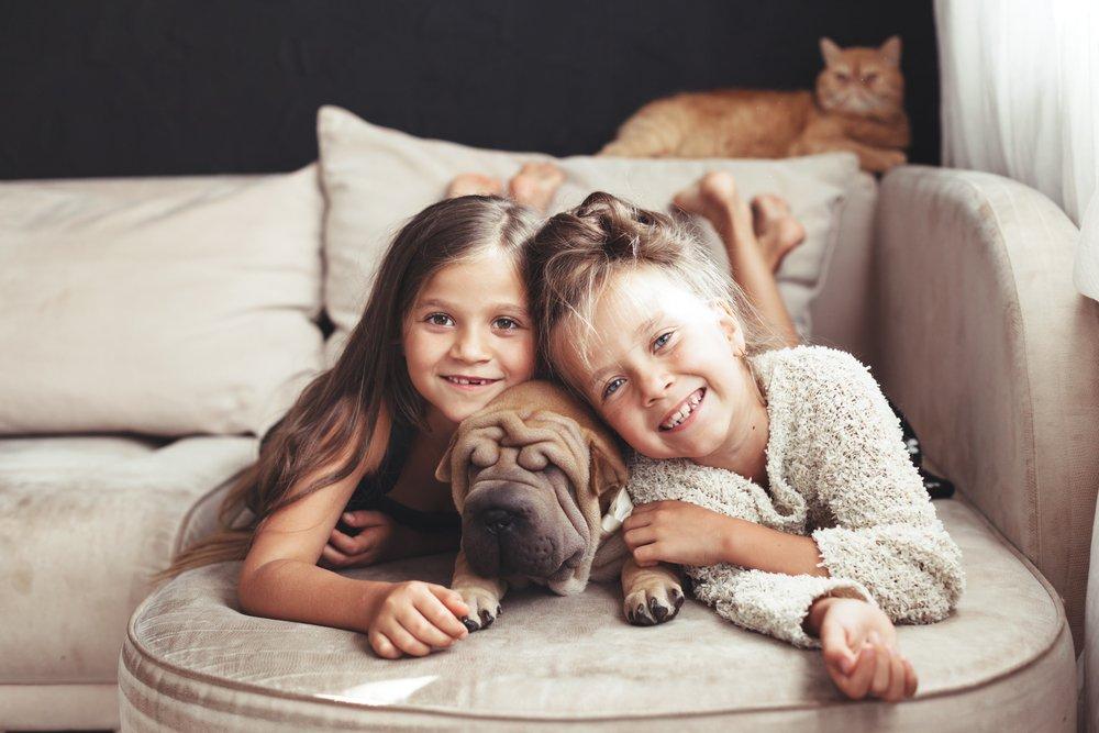 Photo of Sharpei, un cane molto speciale: tutto sull'aspetto, il carattere, i cuccioli e la cura