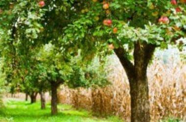 Come piantare un albero di mele con successo: la guida pratica