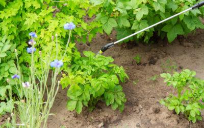 Come proteggere l'orto dagli insetti: tutti i rimedi naturali