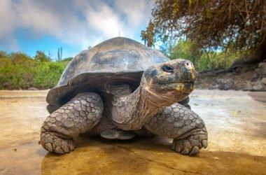 Ecco gli animali che vivono molto più a lungo dell'uomo