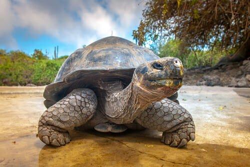 Photo of Ecco gli animali che vivono molto più a lungo dell'uomo